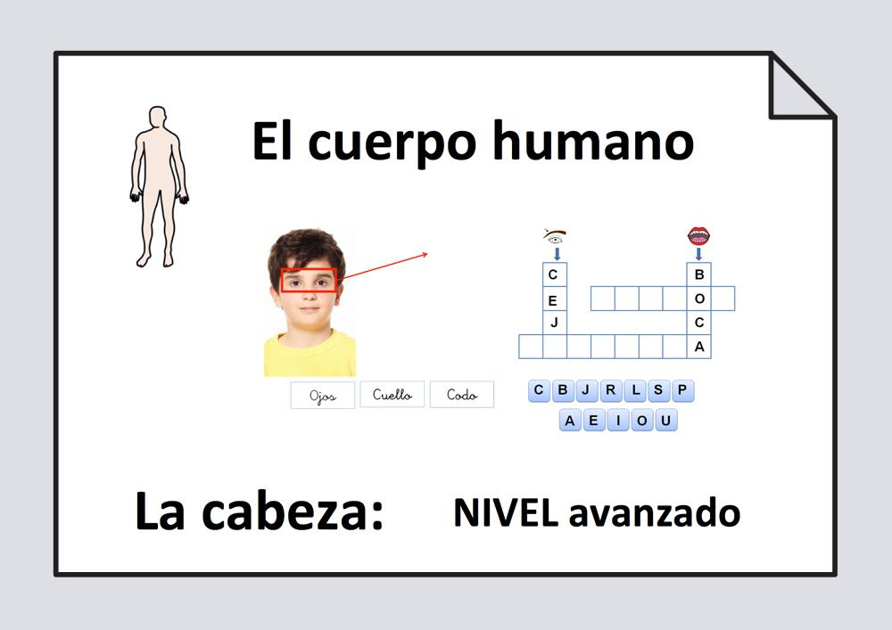 El cuerpo humano: la cabeza