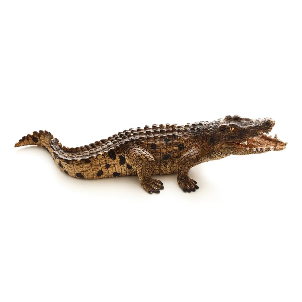 Imagen de un cocodrilo en vista lateral