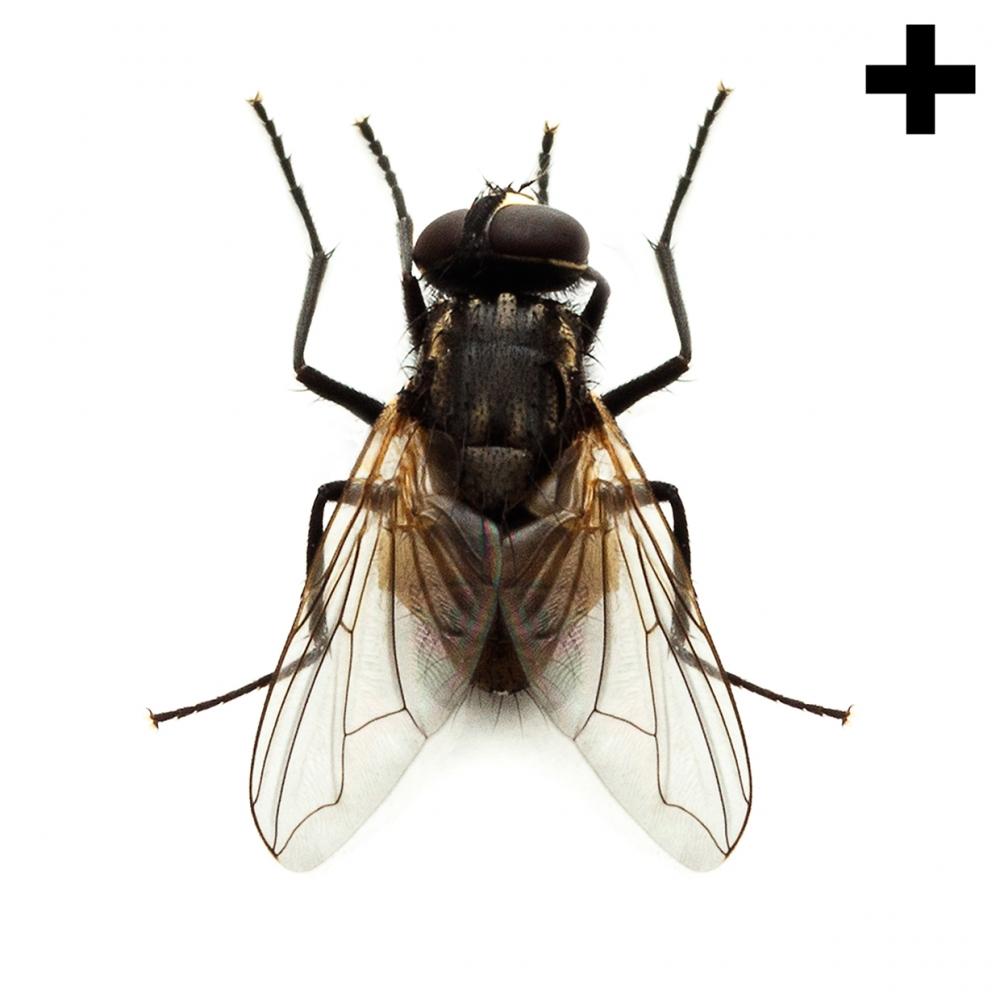 Imagen en la que se ve una mosca en perspectiva cenital
