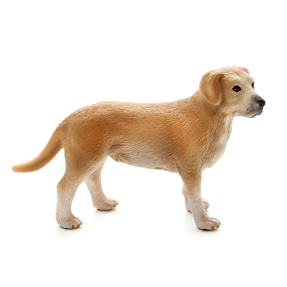 Imagen en la que se ve un perro en perspectiva lateral