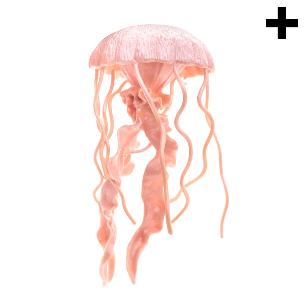 Imagen en la que se ve el plural del concepto medusa