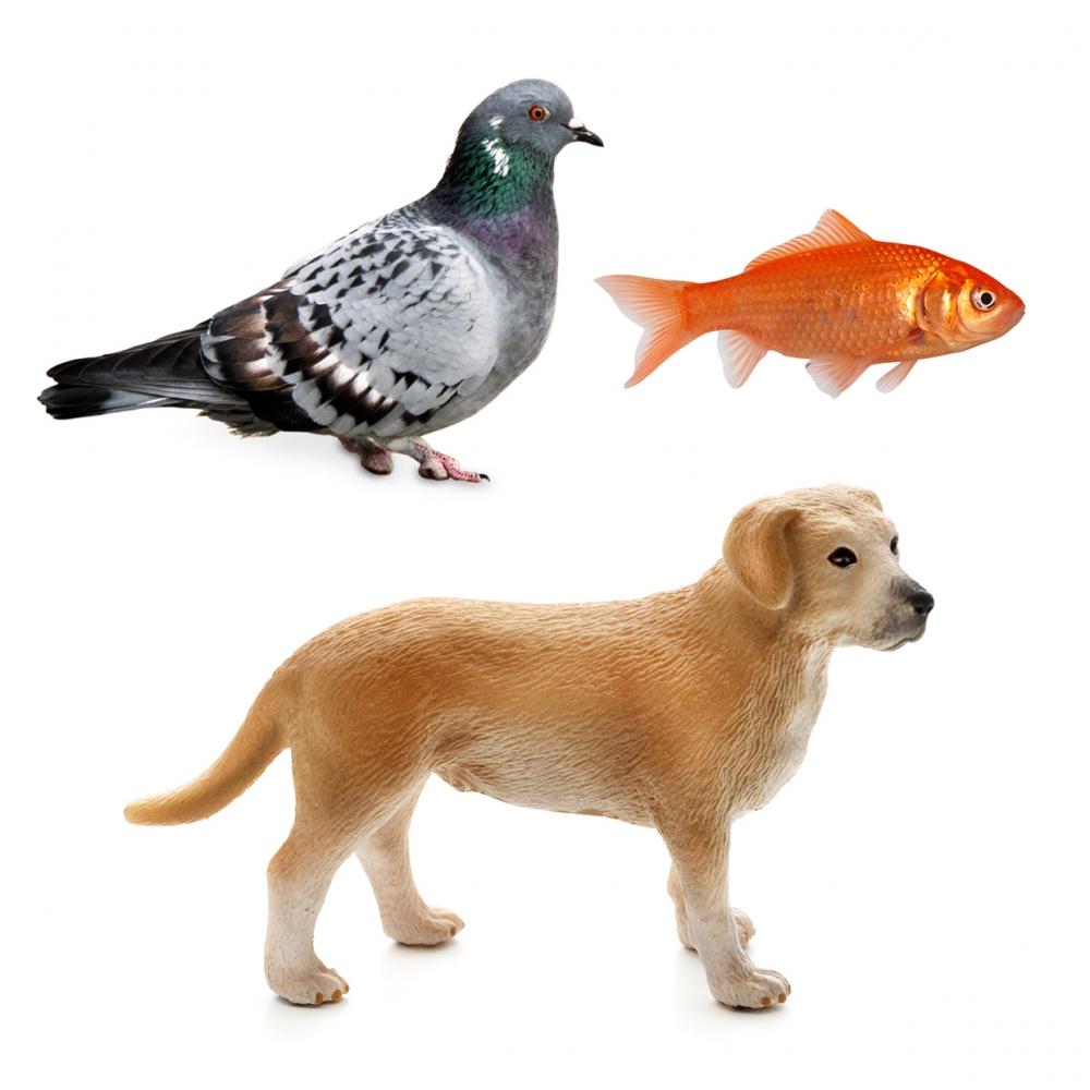 Imagen en la que se ven tres animales: una paloma, un perro y un pez