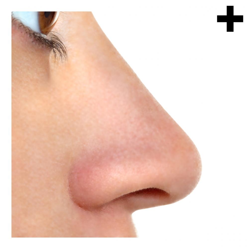 Imagen en la que se ve el plural del concepto nariz