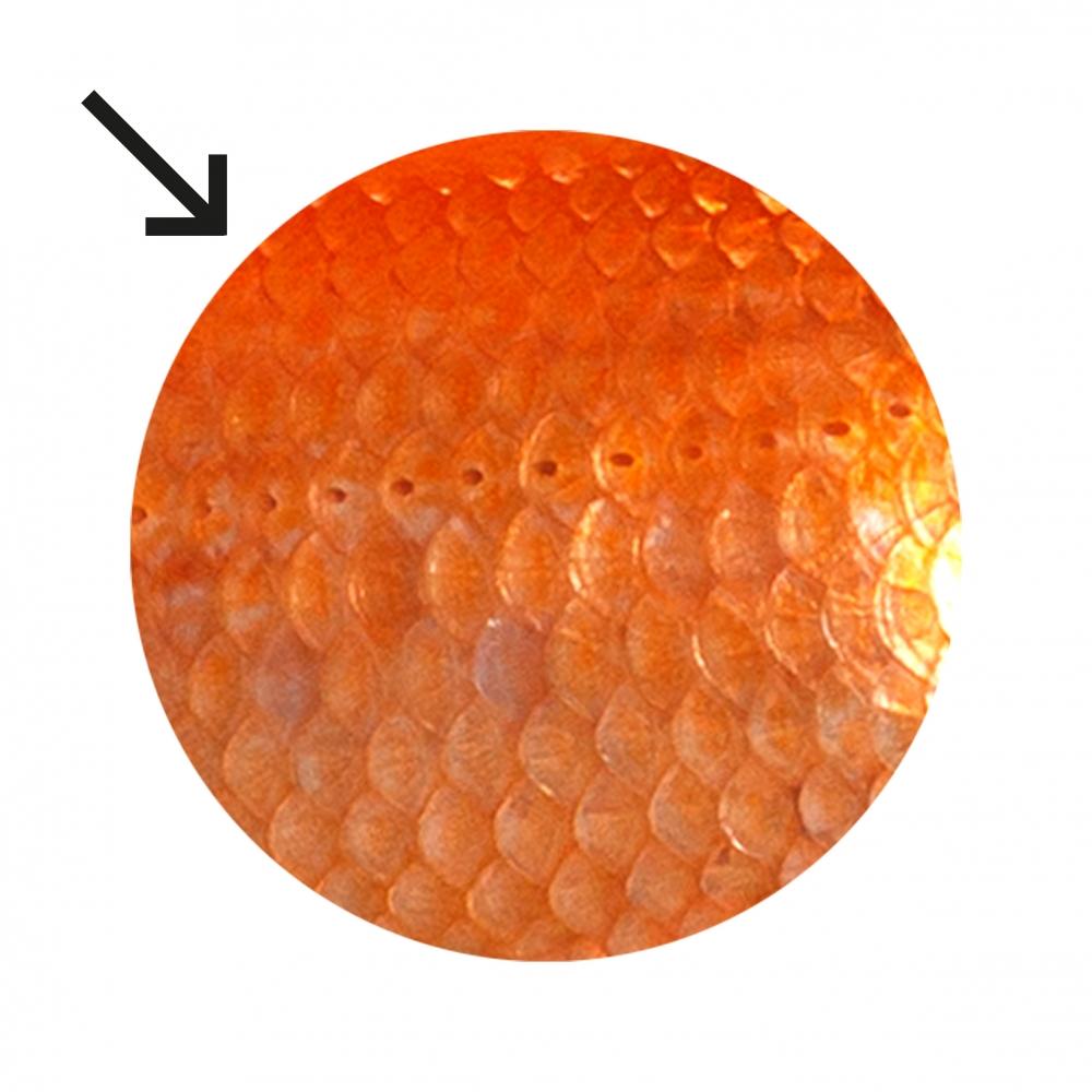 Imagen en la que se ven escamas de animal