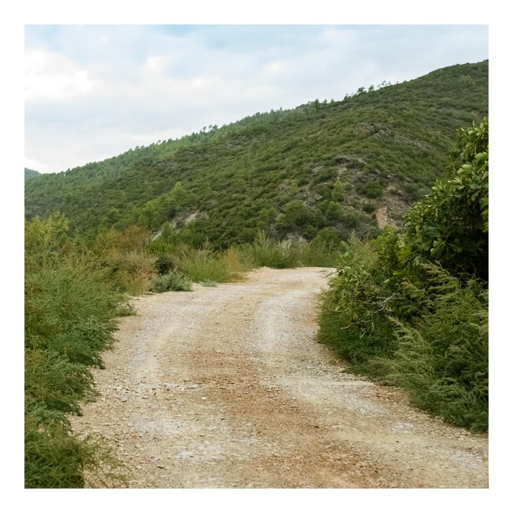 Imagen en la que se ve un camino