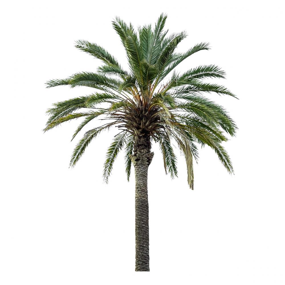 Imagen en la que se ve una palmera