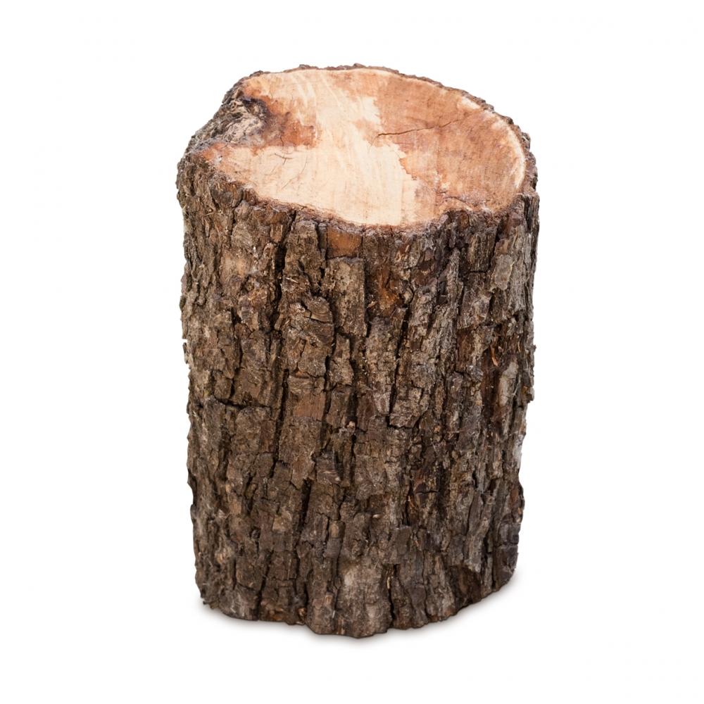 Imagen en la que se ve un tronco