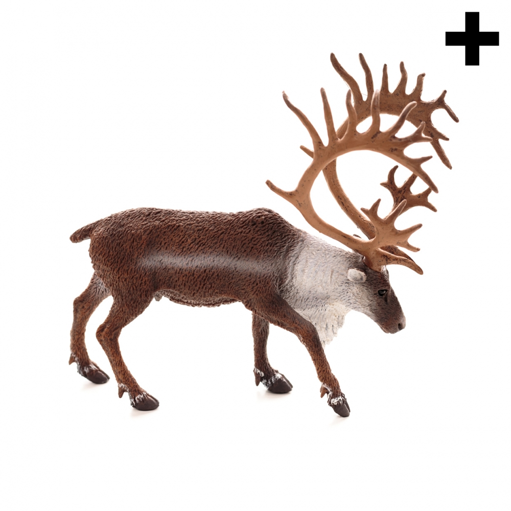 Imagen en la que se ve el plural del concepto reno