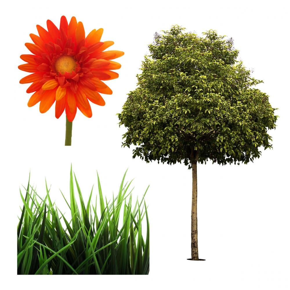 Imagen en la que se ven tres plantas: una flor, cesped y un árbol