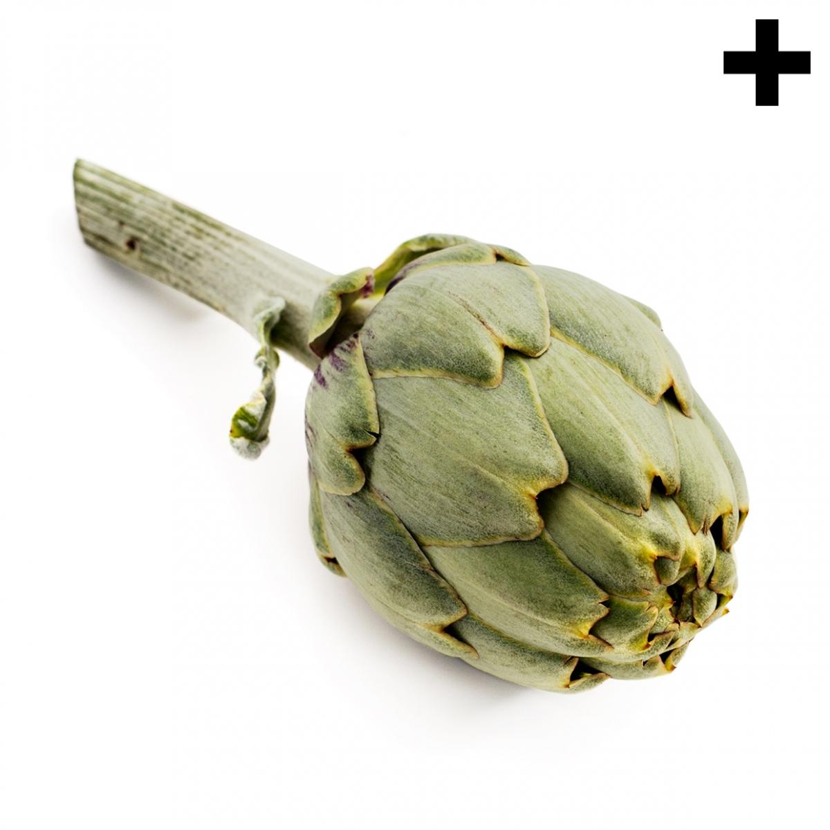 Imagen en la que se ve el plural del concepto alcachofa