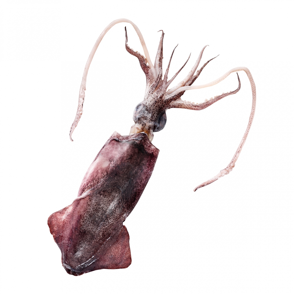 Imagen en la que se ve un calamar