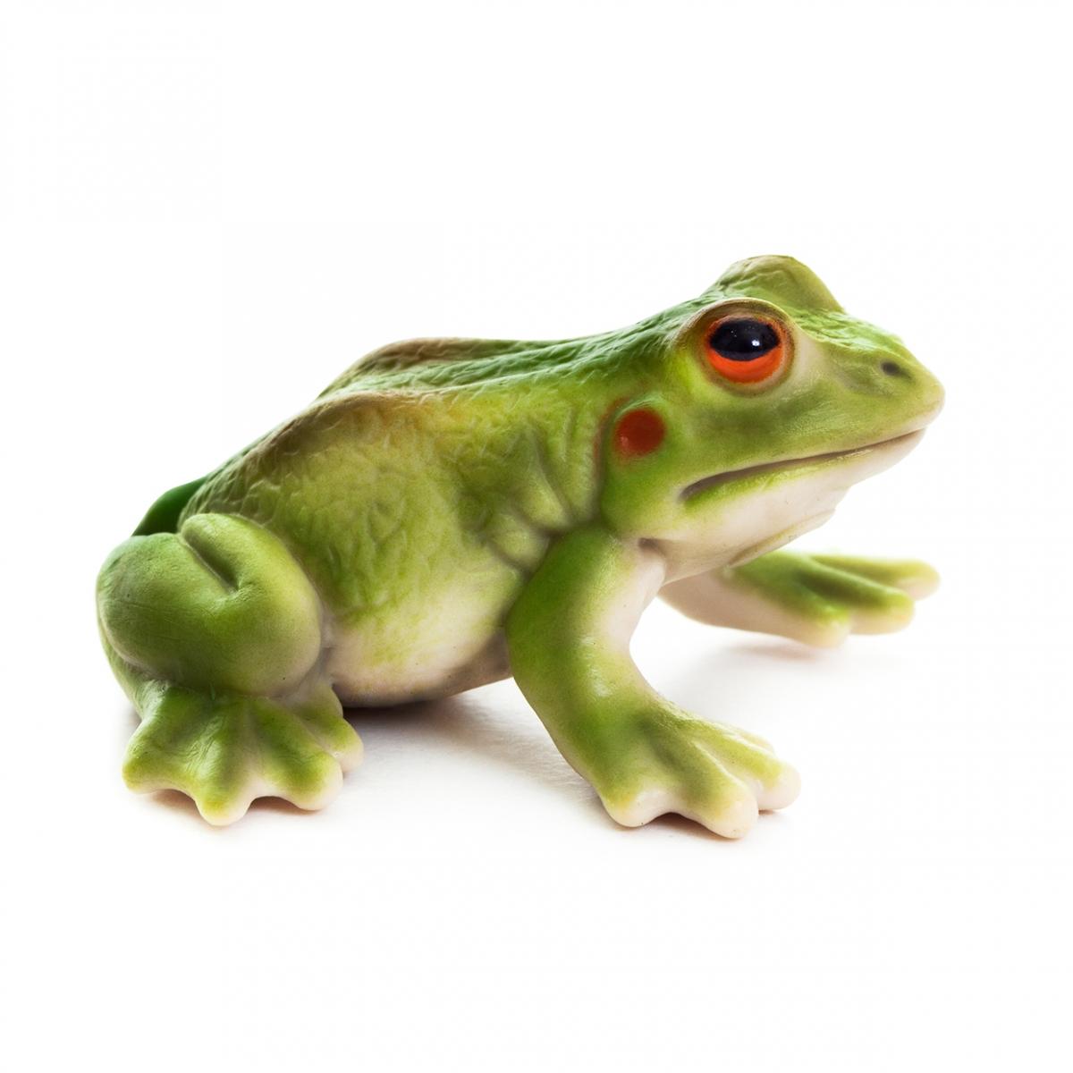 Imagen en la que se ve una rana verde en perspectiva lateral