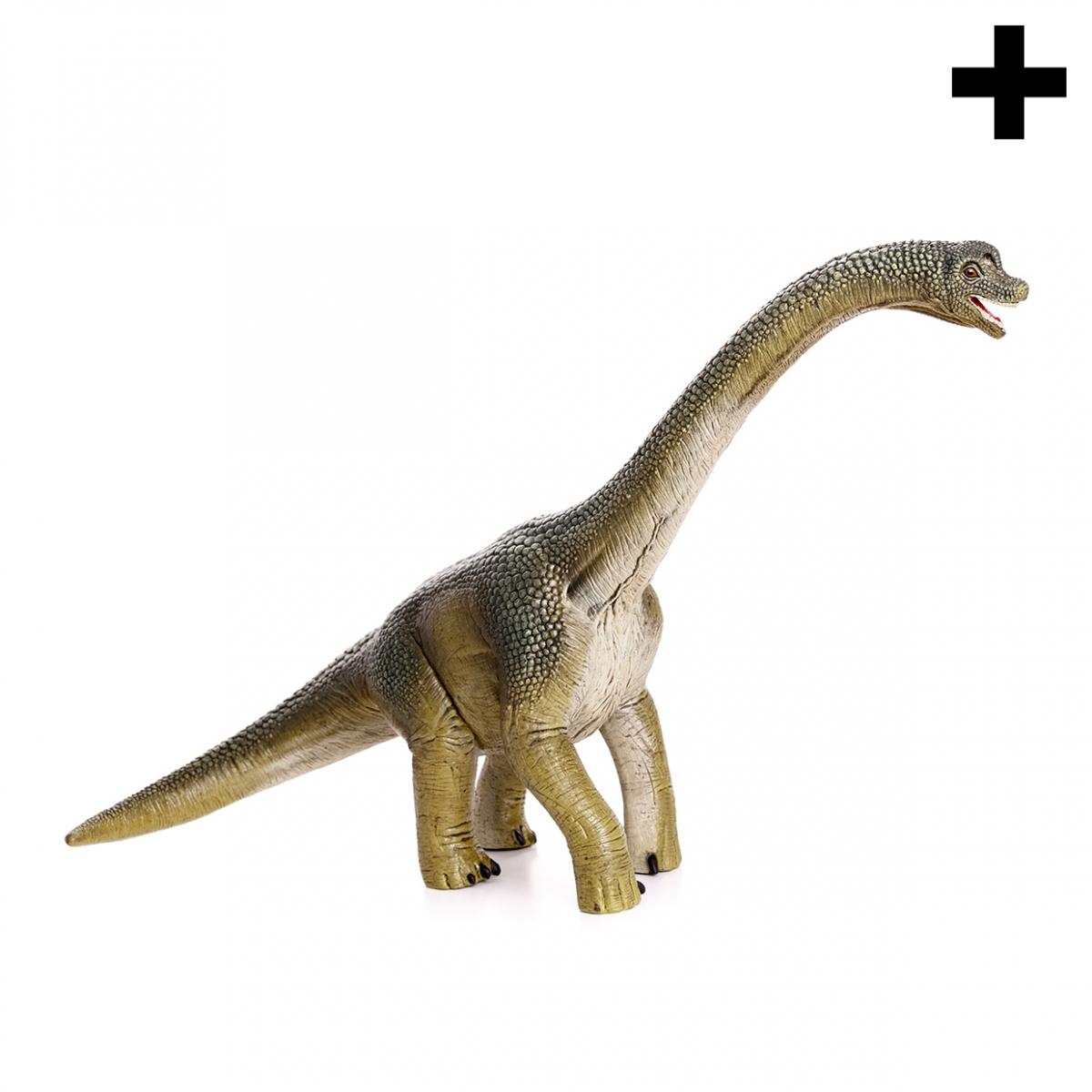 Imagen en la que se ve el plural del concepto diplodocus