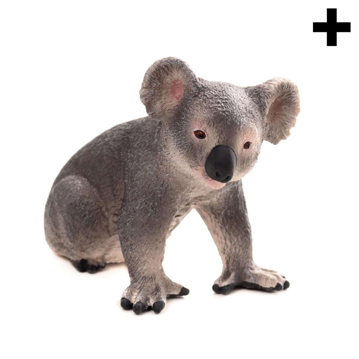 Imagen en la que se ve el plural del concepto koala