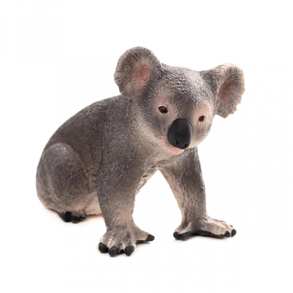Imagen en la que se ve a un koala