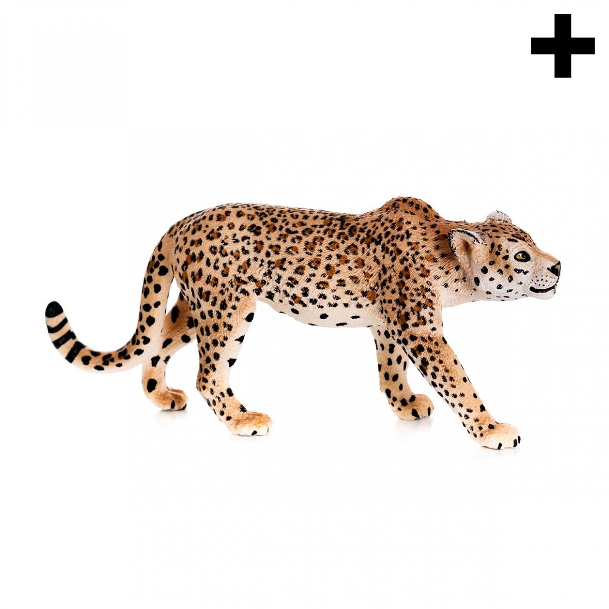 Imagen en la que se ve el plural del concepto leopardo