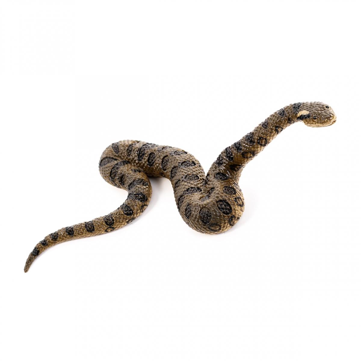 Imagen en la que se ve una serpiente