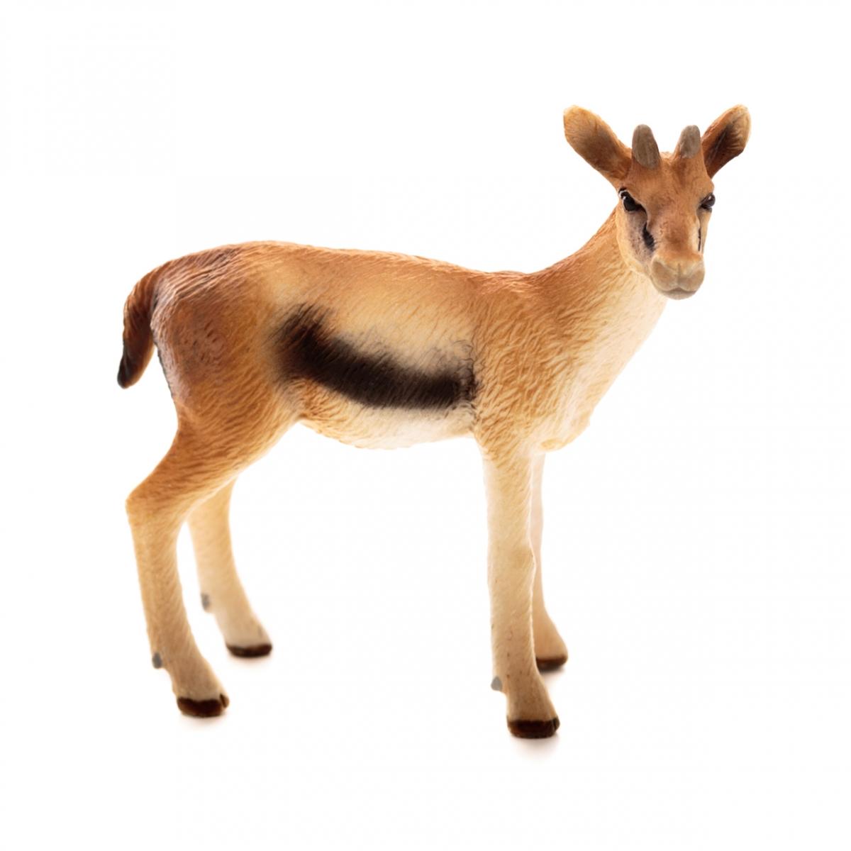 Imagen en la que se ve a una gacela