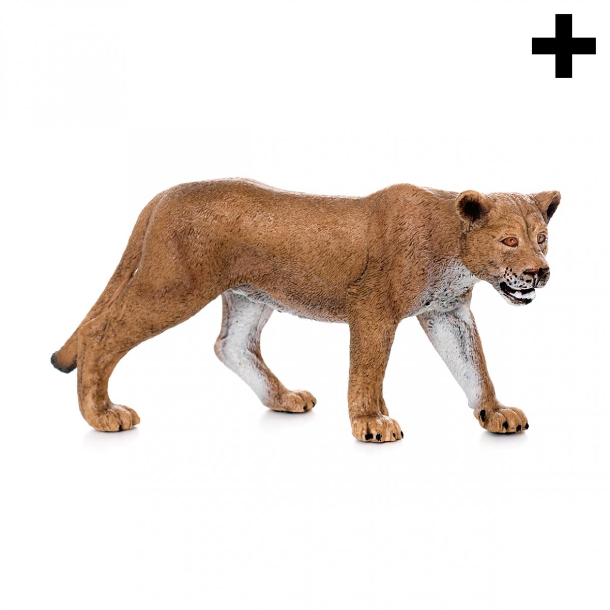 Imagen en la que se ve el plural del concepto leona