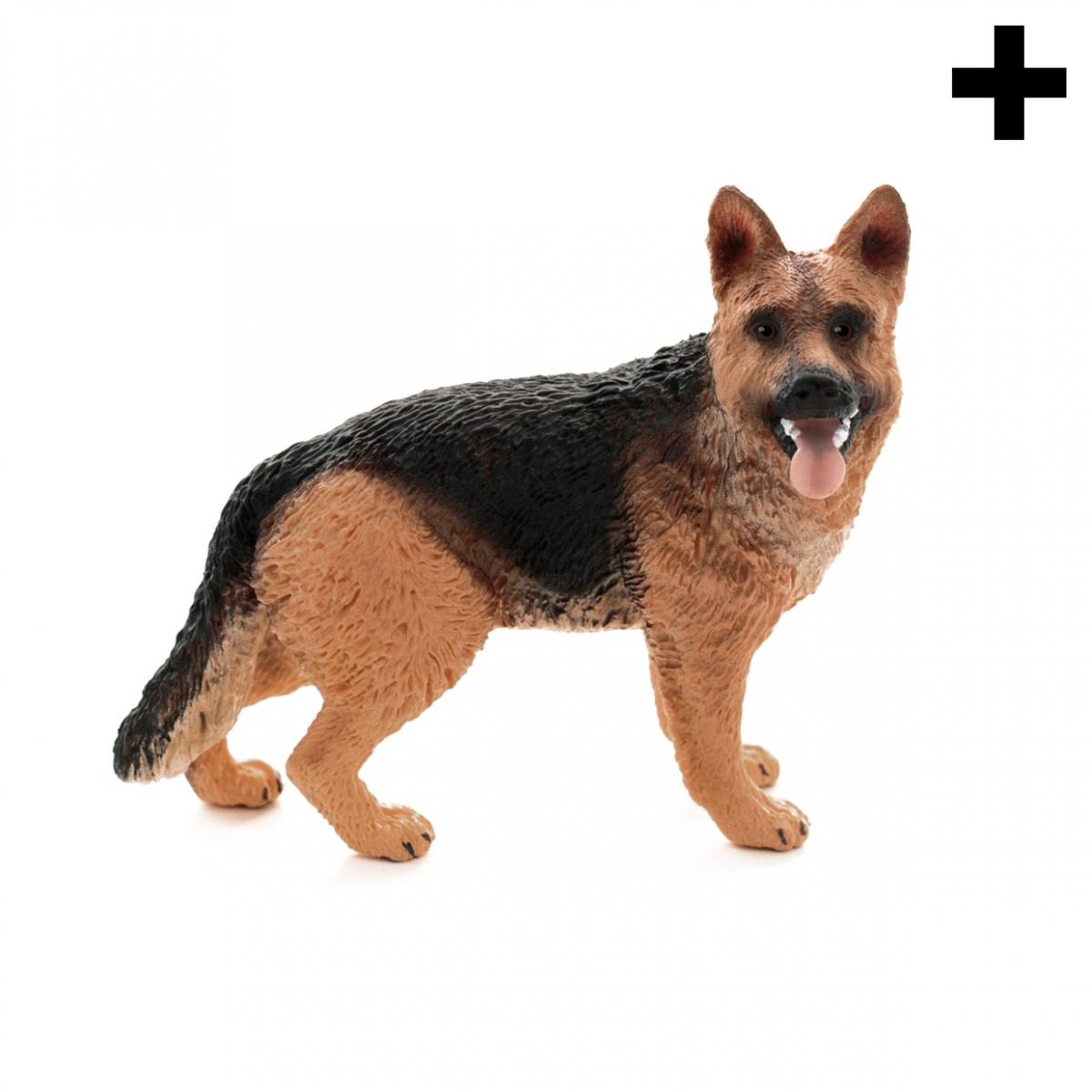 Imagen en la que se ve el plural del concepto pastor alemán