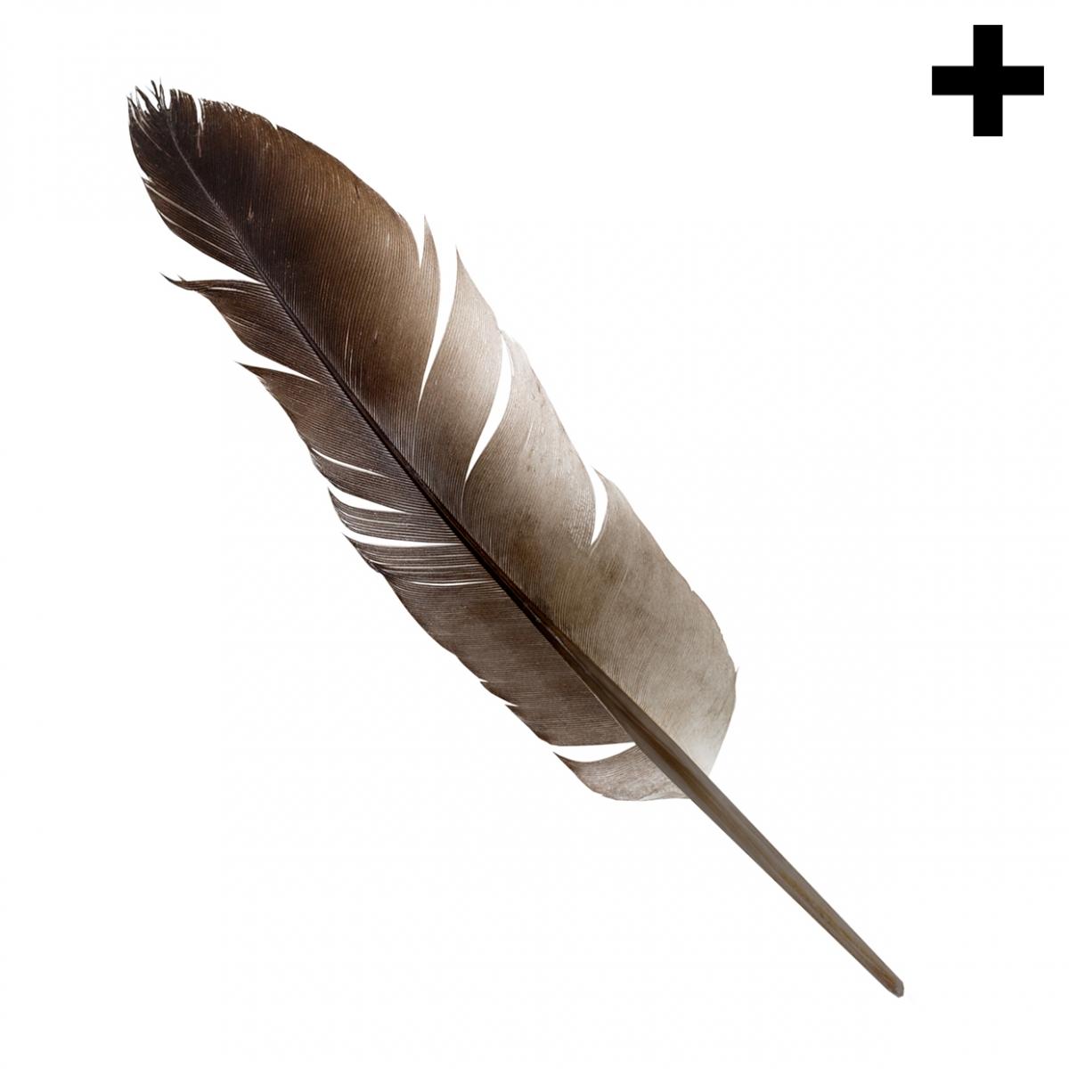 Imagen en la que se ve el plural del concepto pluma