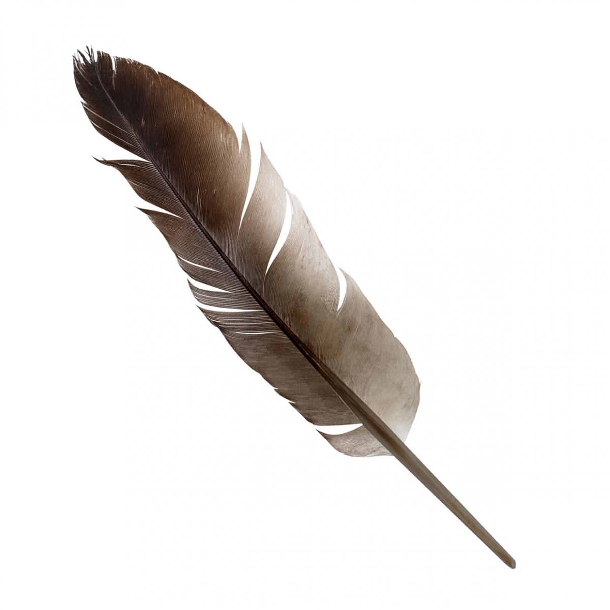 Imagen en la que se ve una pluma