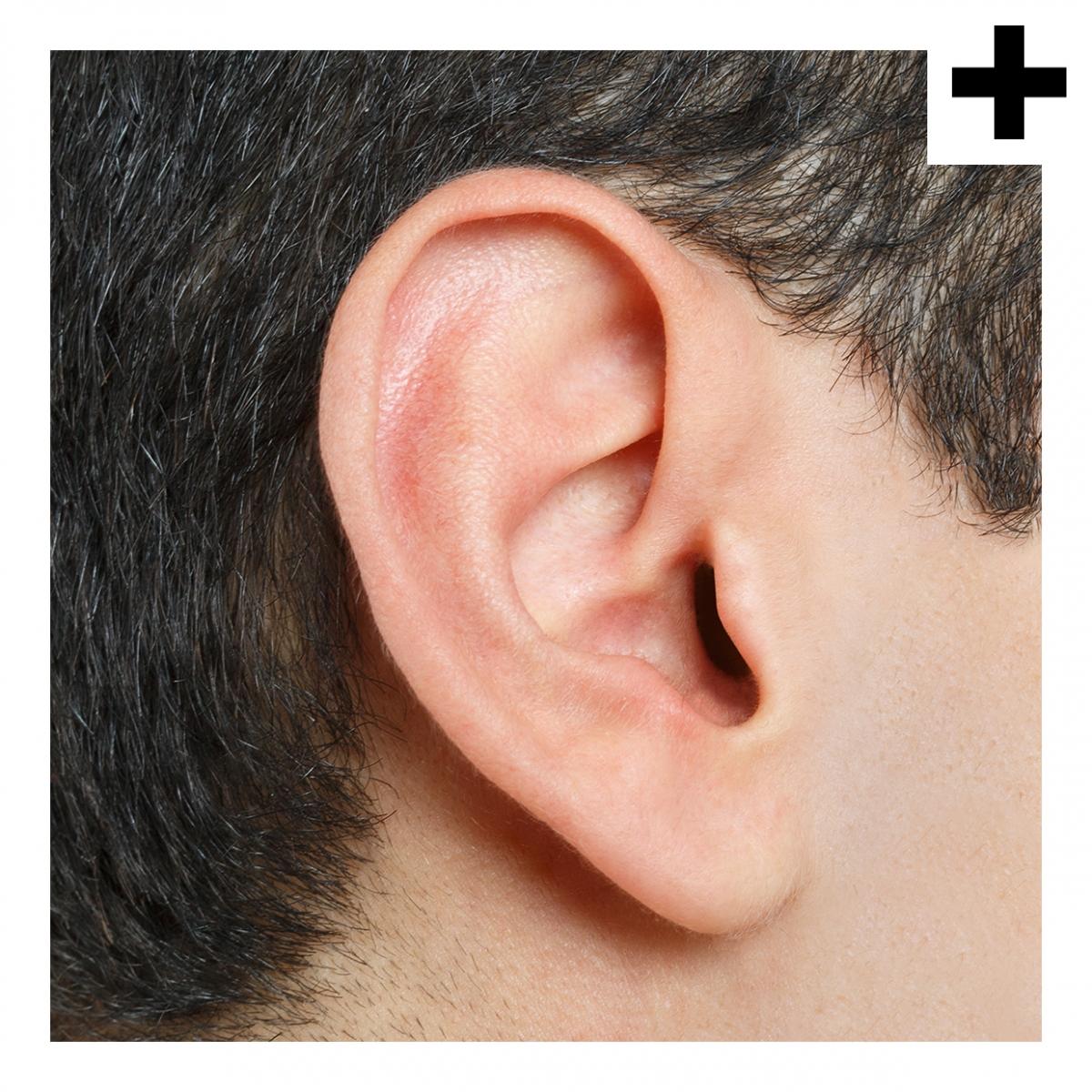 Imagen en la que se ve el plural del concepto oreja
