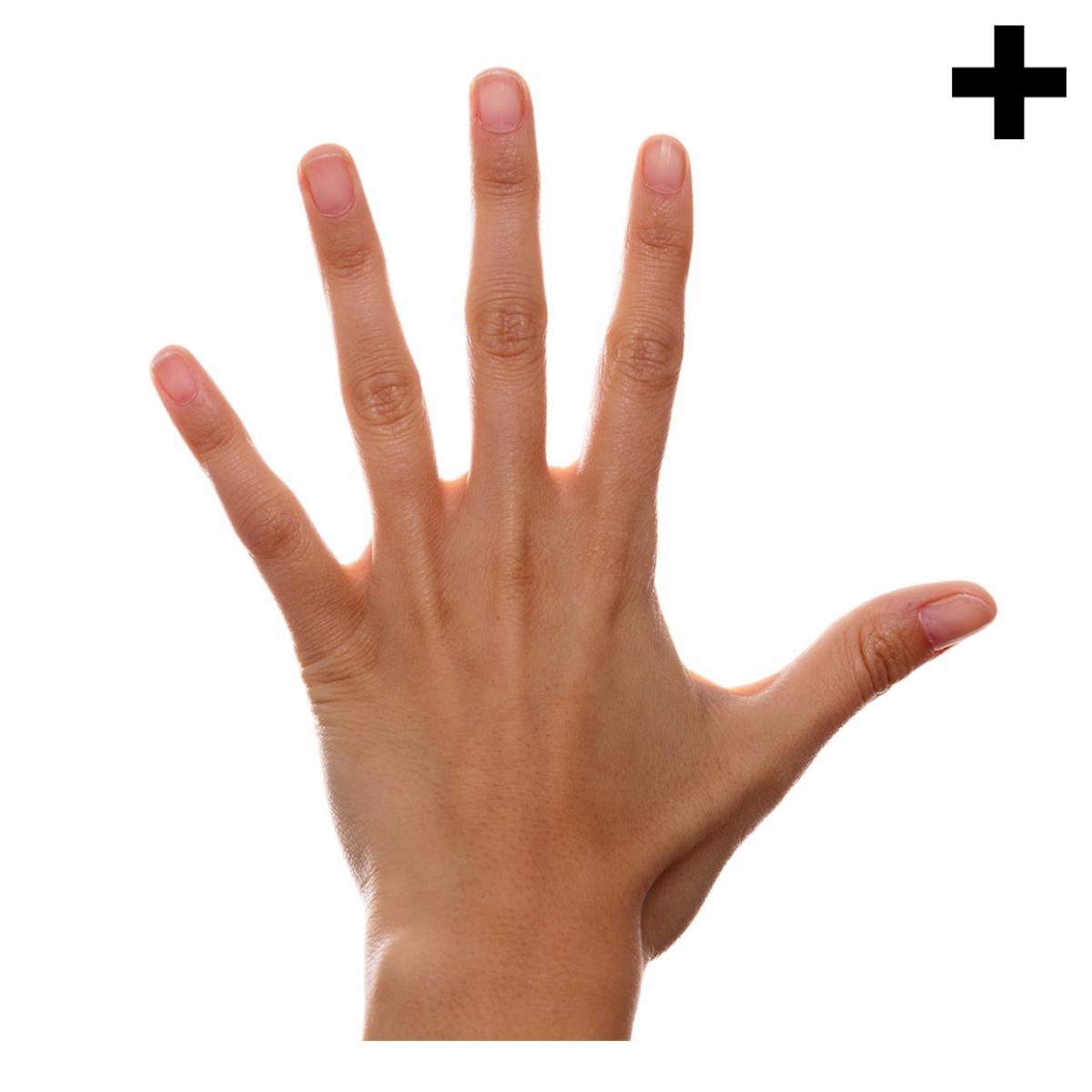 Imagen en la que se ve el plural del concepto mano
