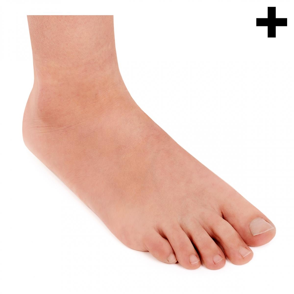 Imagen en la que se ve el plural del concepto pie