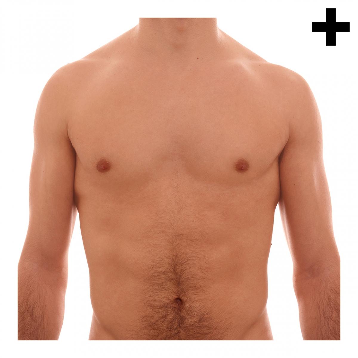 Imagen en la que se ve el plural del concepto torso