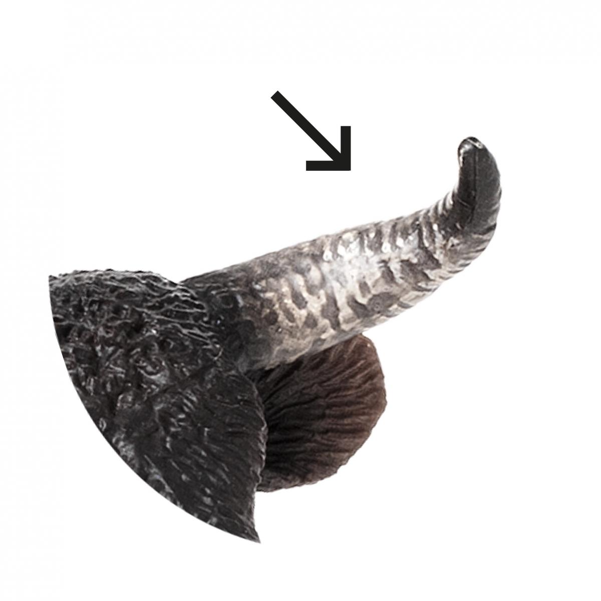 Imagen en la que se ve un cuerno de animal