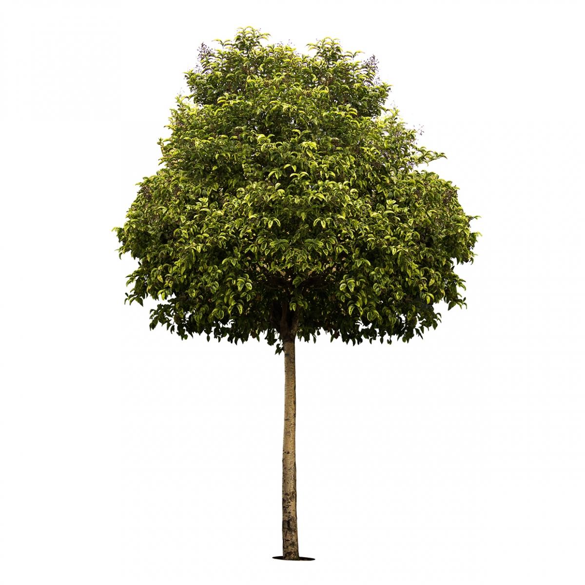 Imagen en la que se ve un árbol
