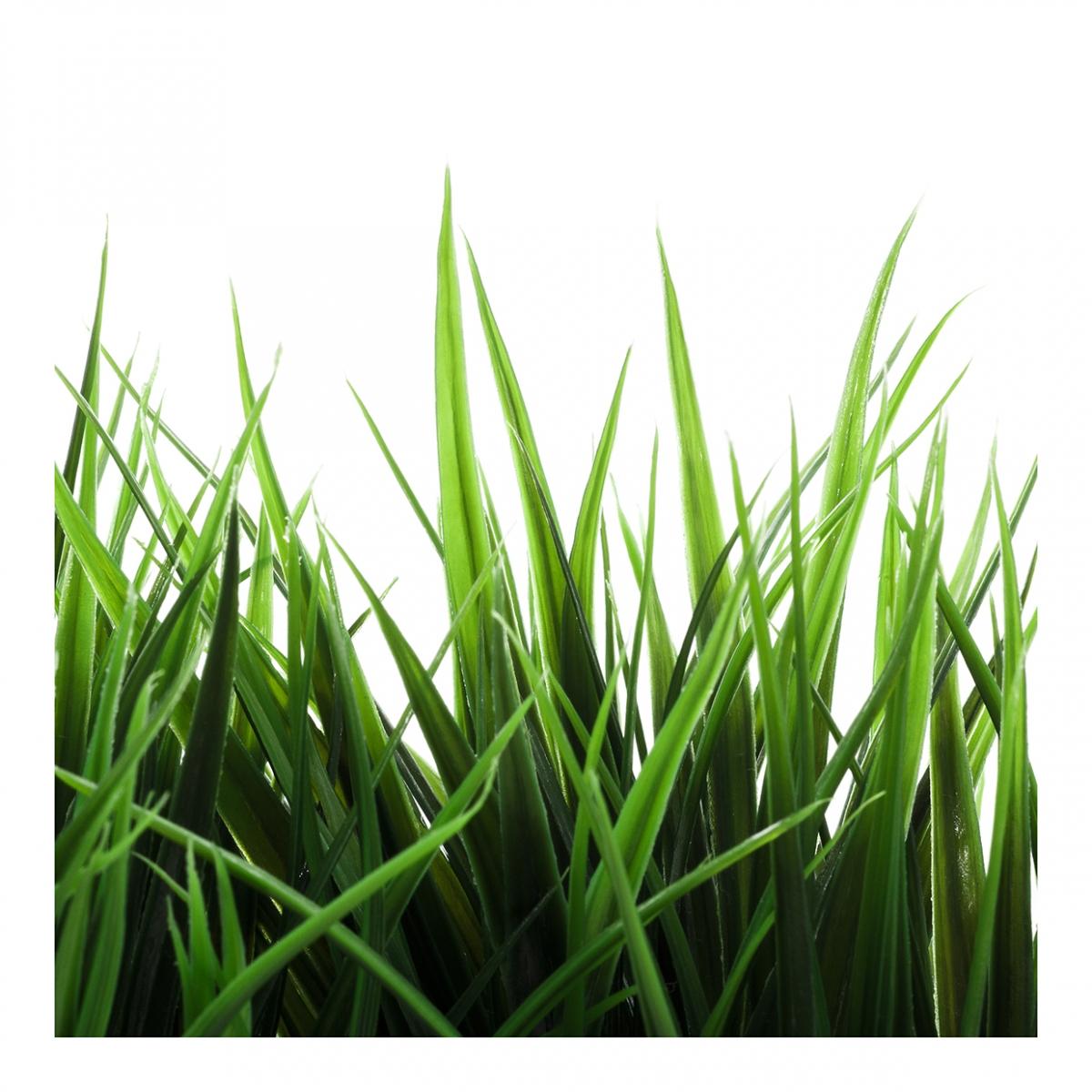 Imagen en la que se ve hierba