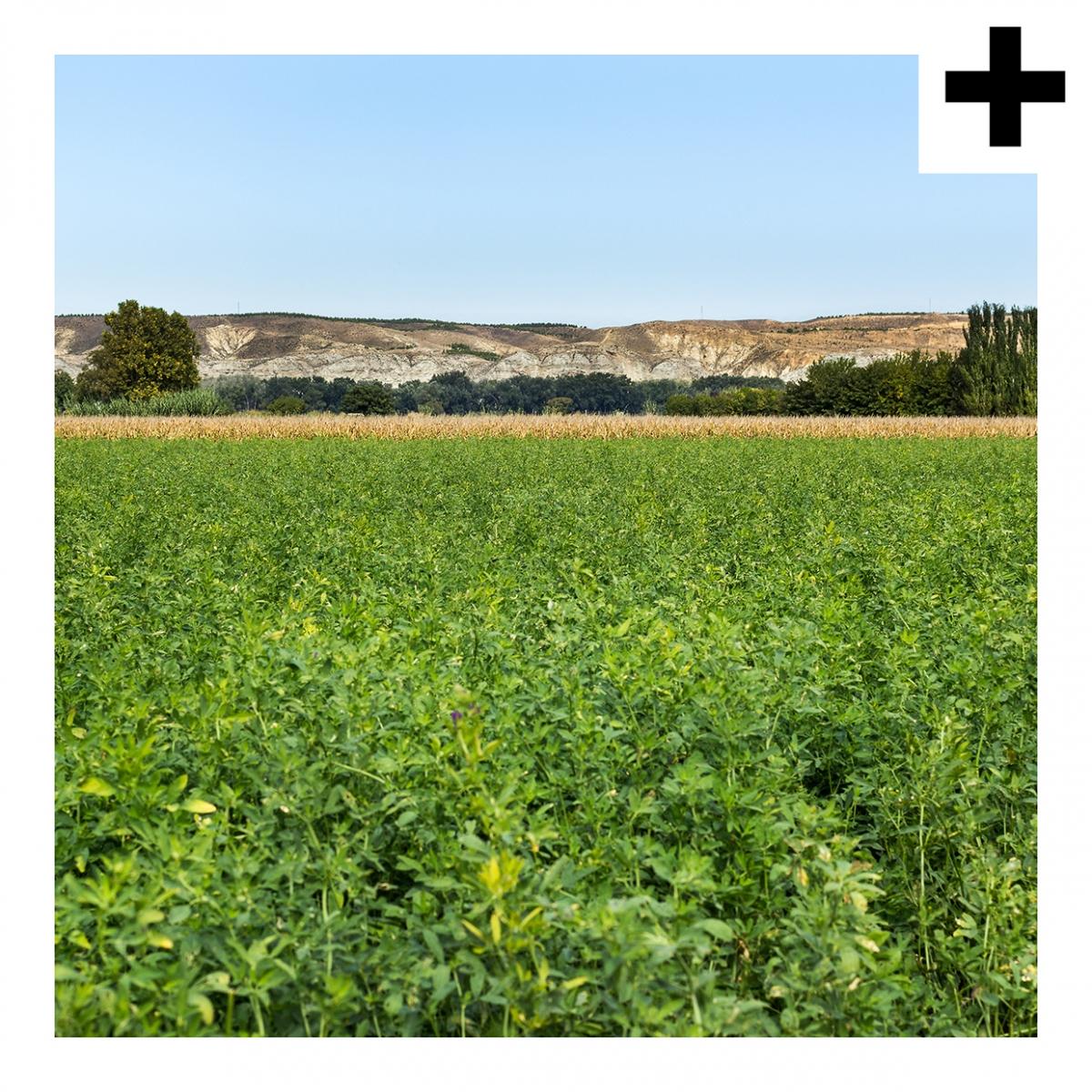 Imagen en la que se ve un campo verde con colinas al fondo