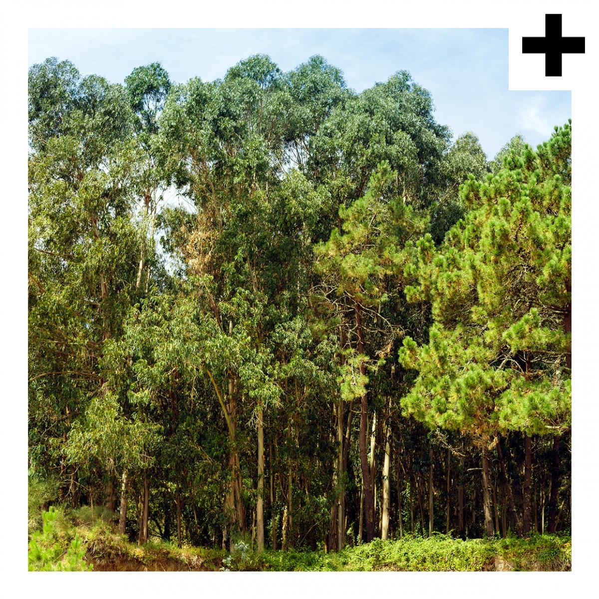 Imagen en la que se ve el plural del concepto bosque