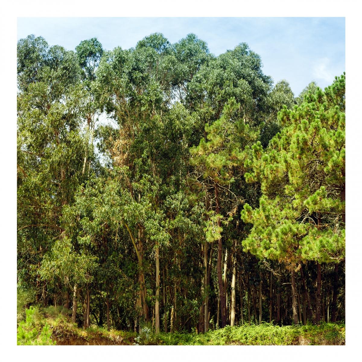 Imagen en la que se ve un bosque