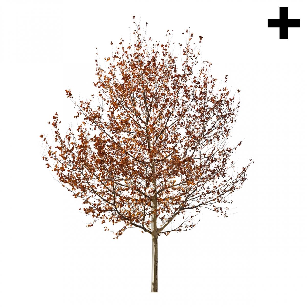Imagen en la que se ve el plural del concepto árbol de otoño