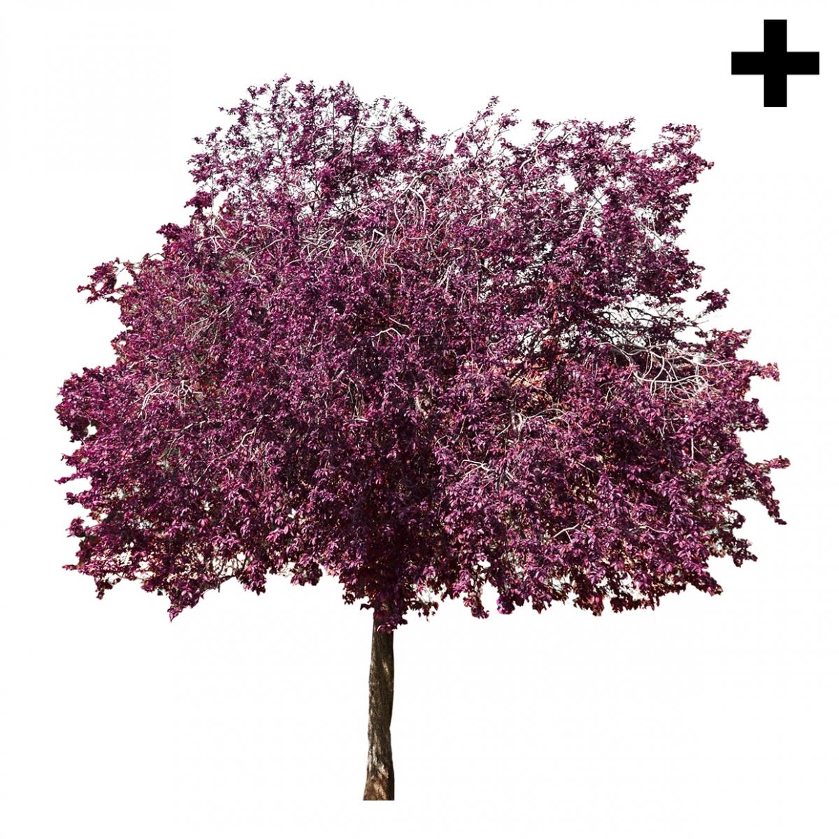 Imagen en la que se ve el plural del concepto árbol en flor