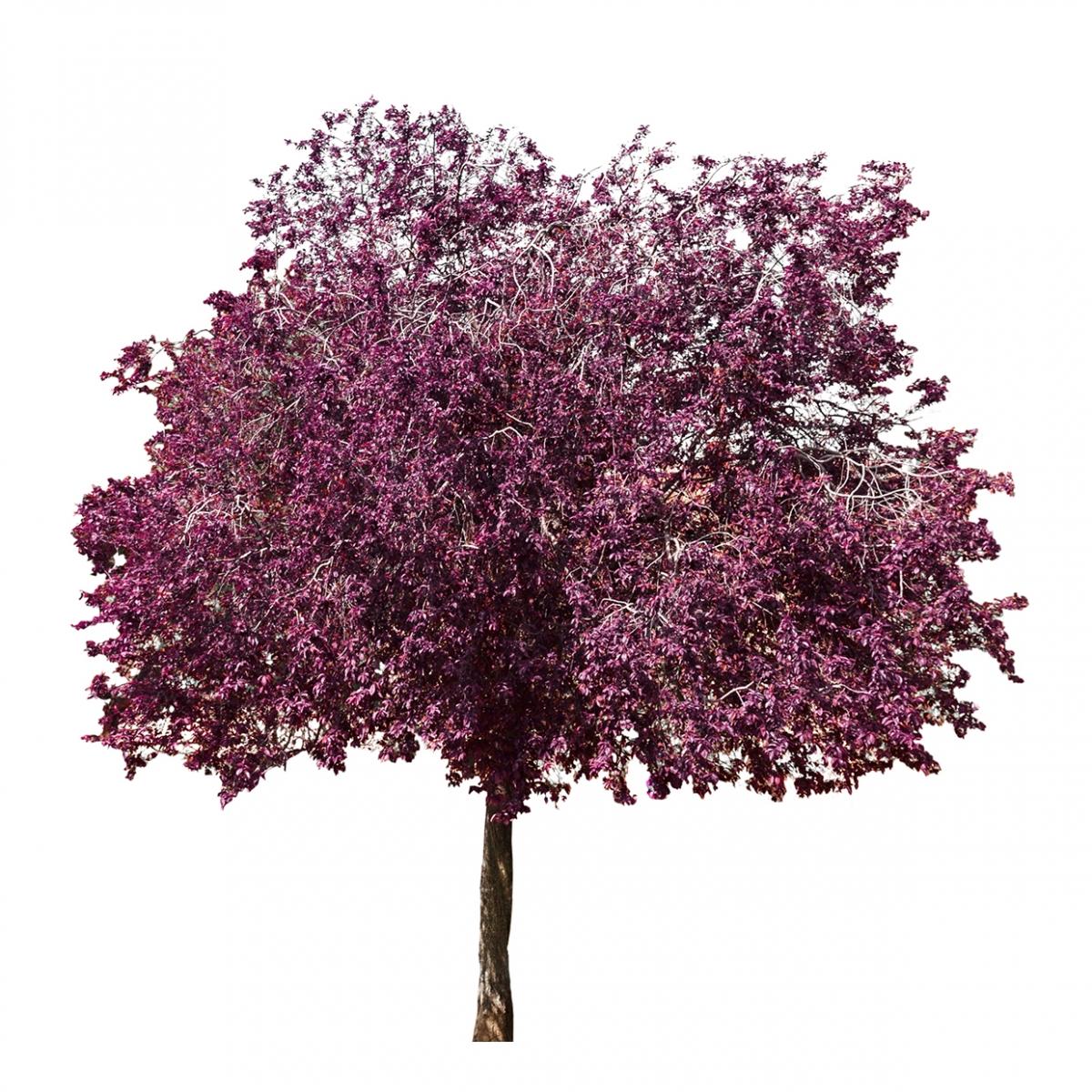 Imagen en la que se ve un árbol en flor