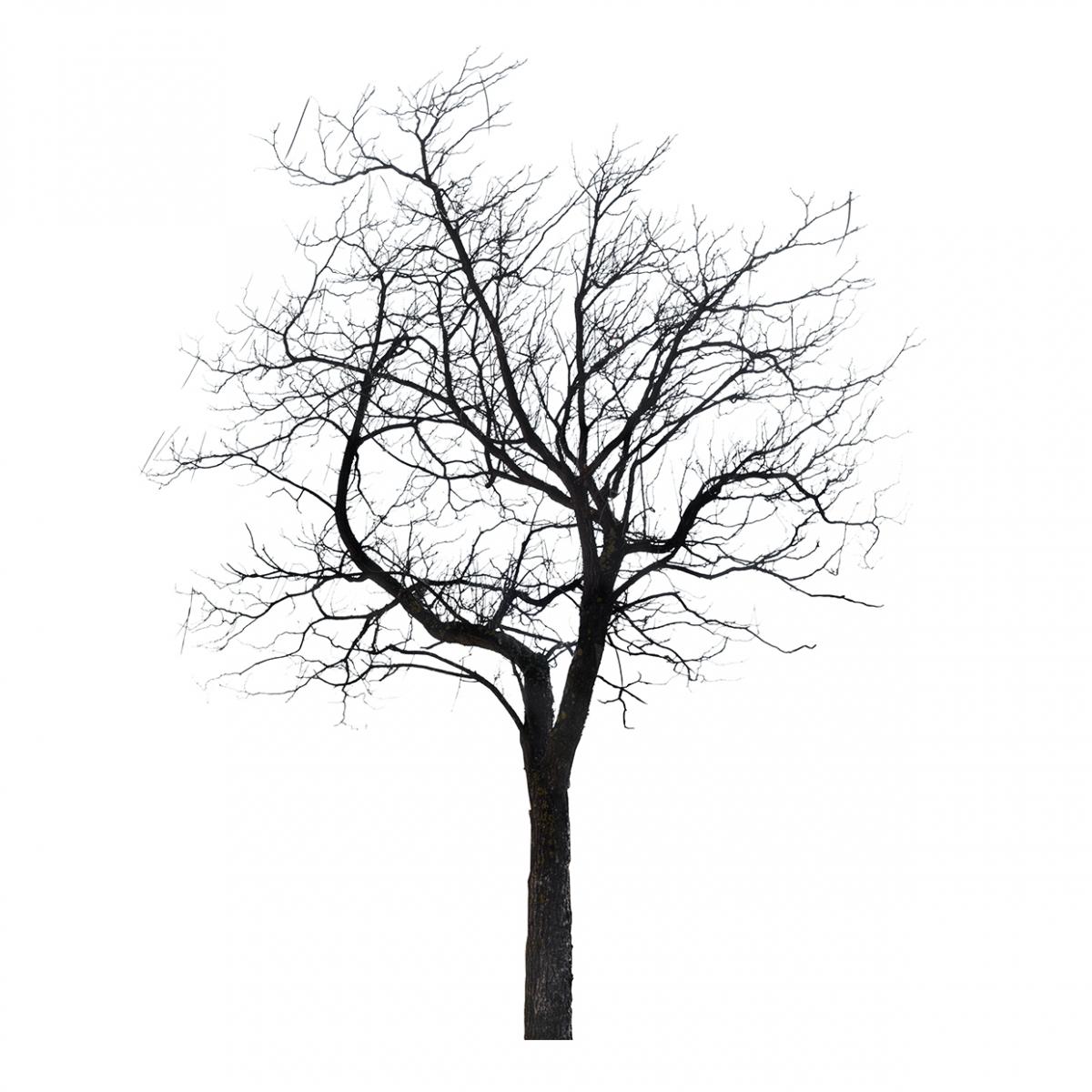 Imagen en la que se ve un árbol sin hojas