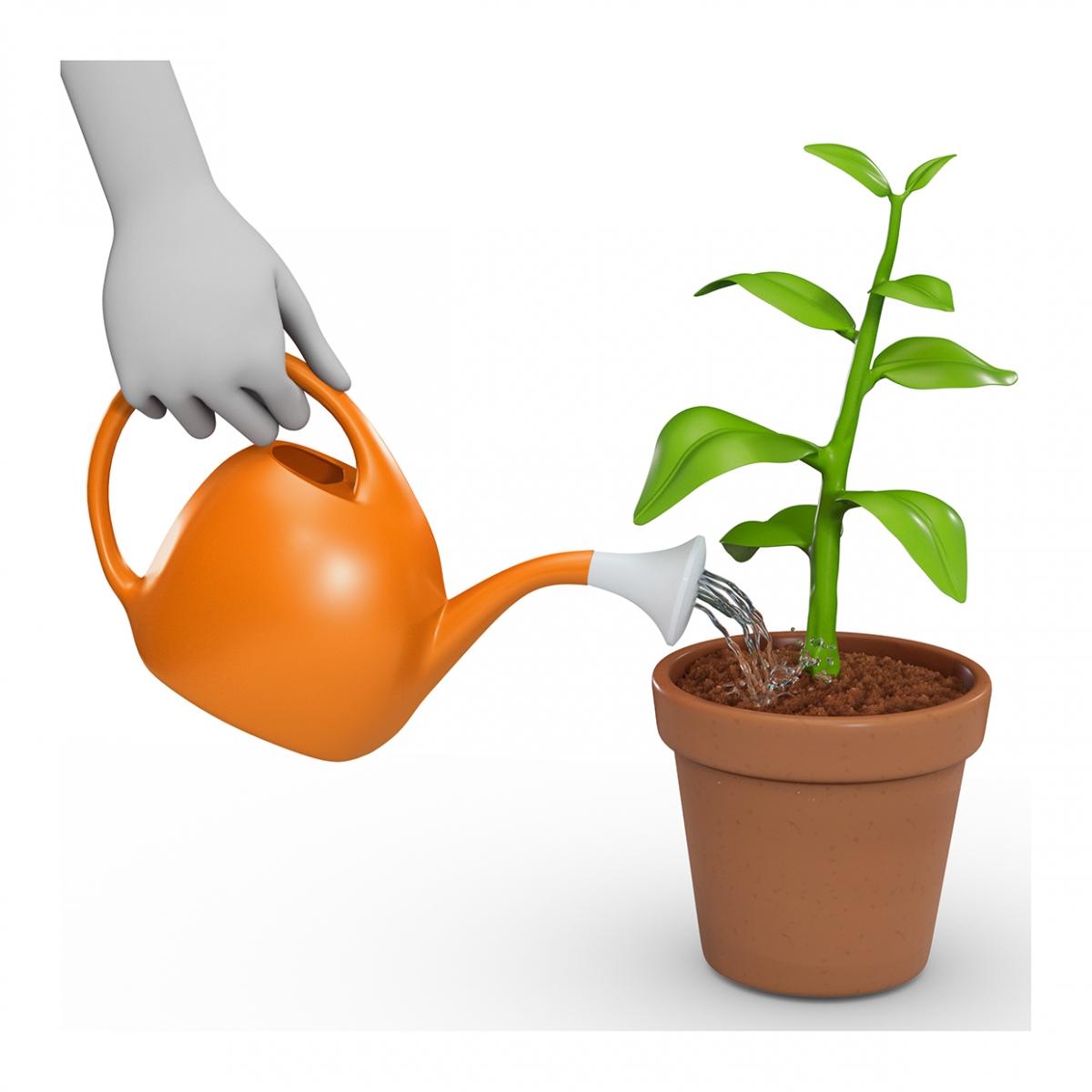 Imagen en la que se ve una mano regando una planta con regadera