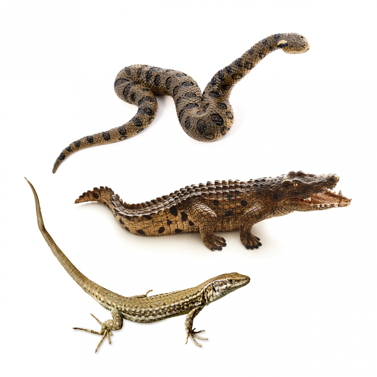 Imagen en la que se ve el concepto genérico de reptiles