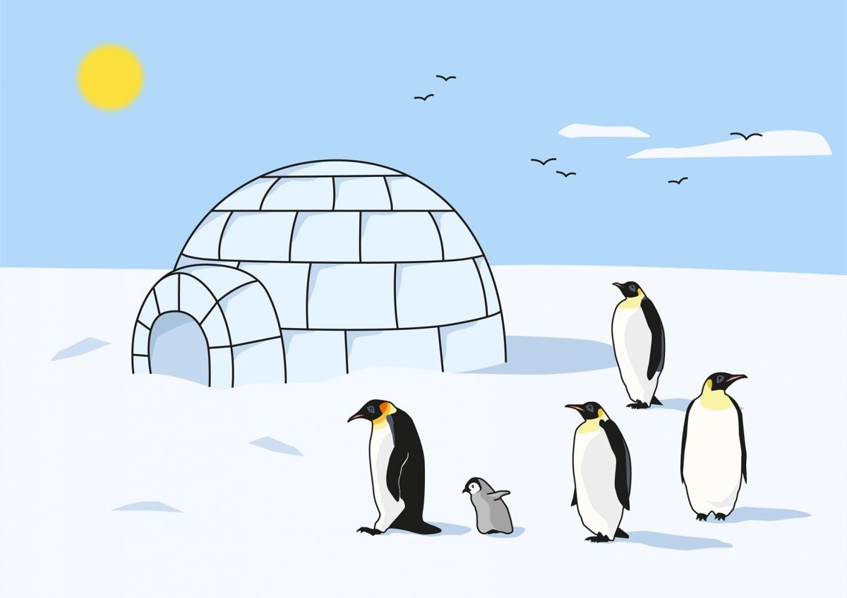 Los pingüinos están fuera del iglú