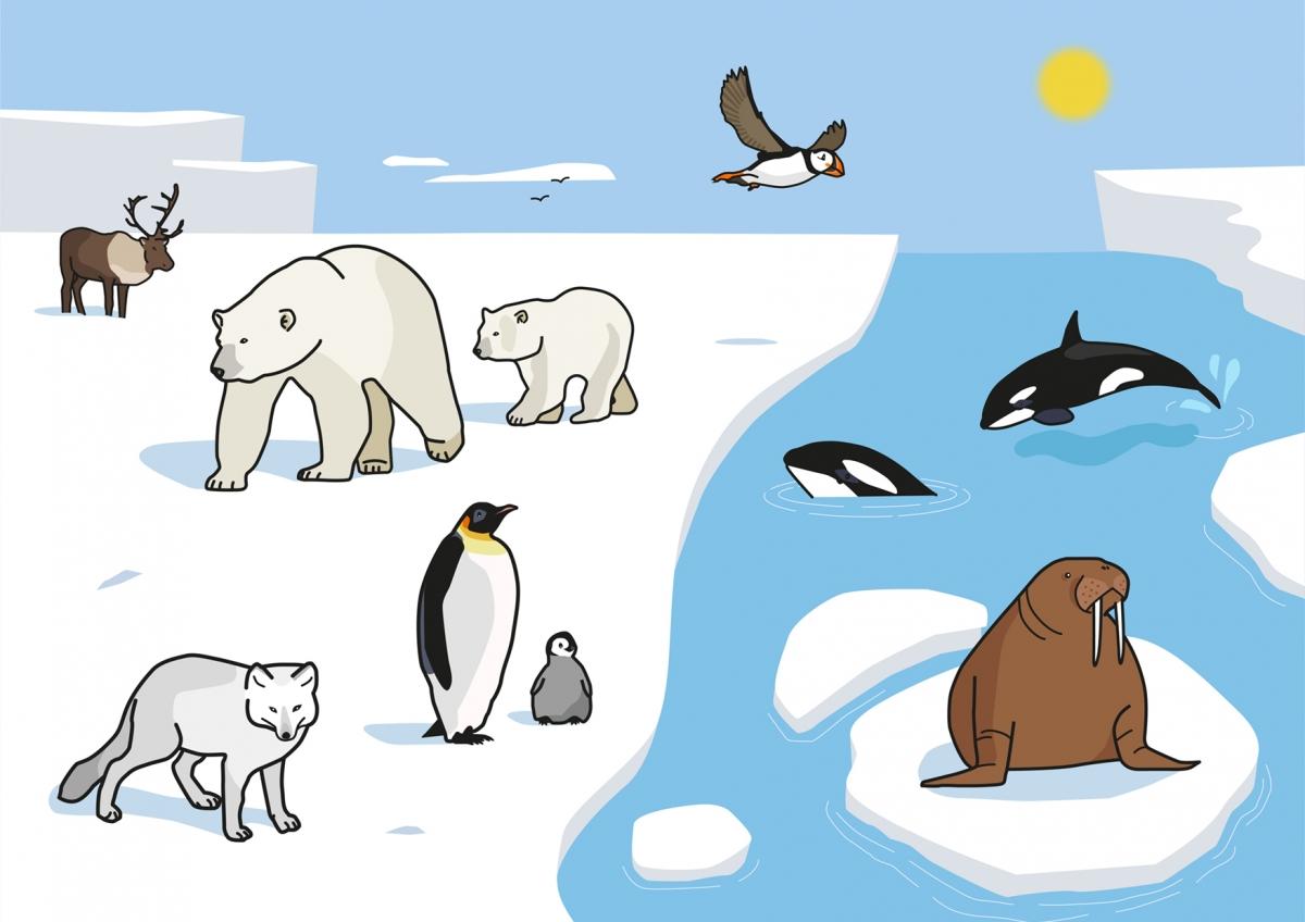 Lámina ilustrada con los diferentes animales que hay en el ártico