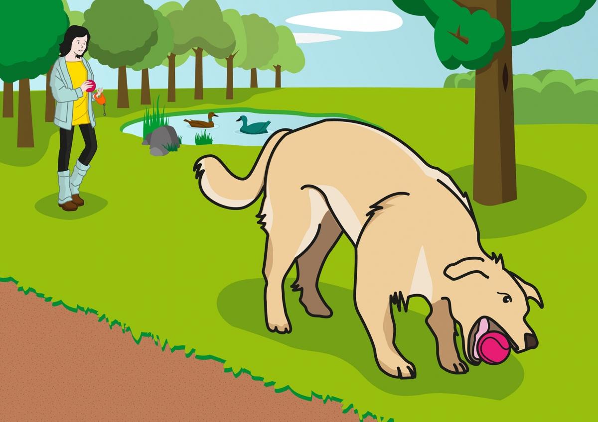 En la escena, se observa a un perro, en primer plano, cogiendo una pelota con la boca en el parque. Al fondo, se observa a la mujer que le ha lanzado la pelota.