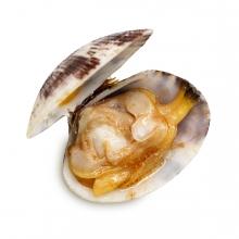 Imagen en la que se ve una almeja