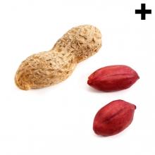 Imagen en la que se ve el plural del concepto cacahuete