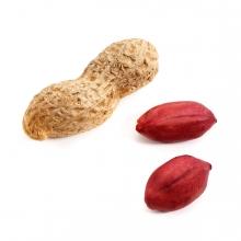 Imagen en la que se ve un cacahuete