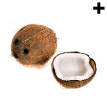 Imagen en la que se ve el plural del concepto coco
