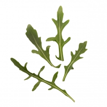 Imagen en la que se ven unas hojas de rúcula